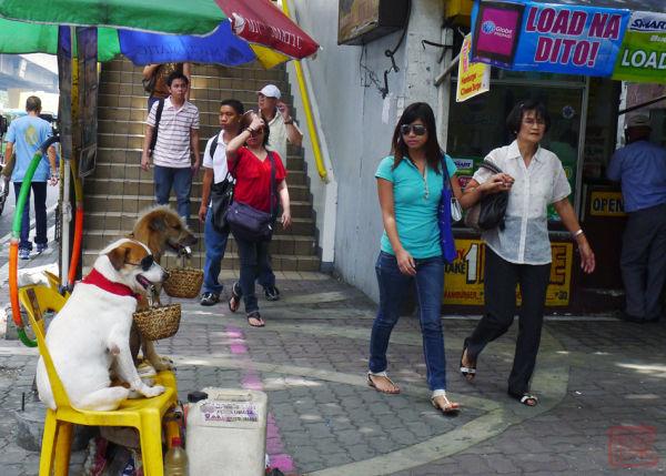 trained dogs pedro gil street lrt 1 basket