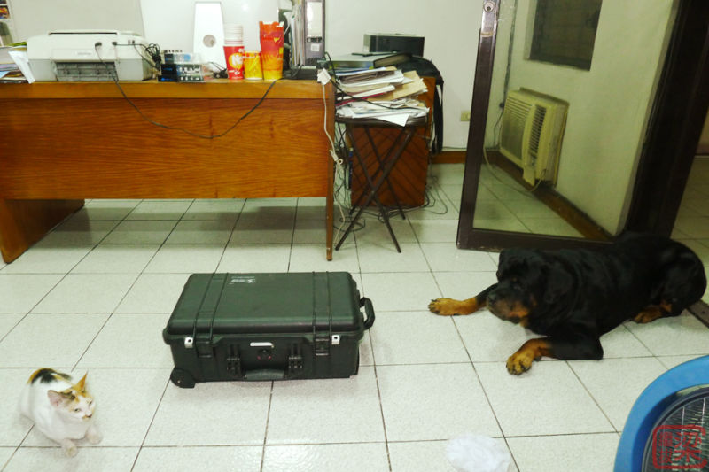 dog and cat rottweiler  mexican standoff
