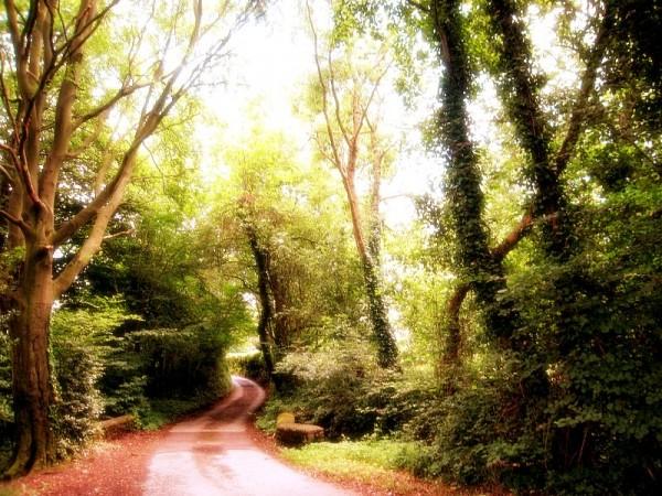 forgotton road