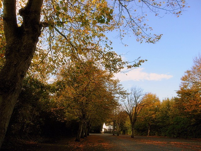 Autumn Series 1#4