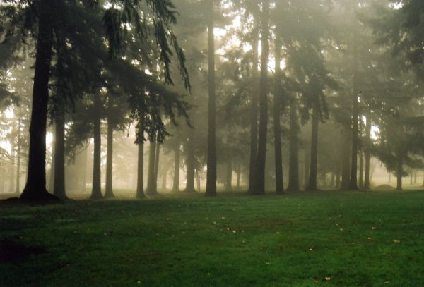 fogged_forest