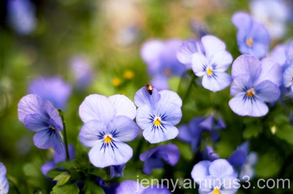 purple & ... friend