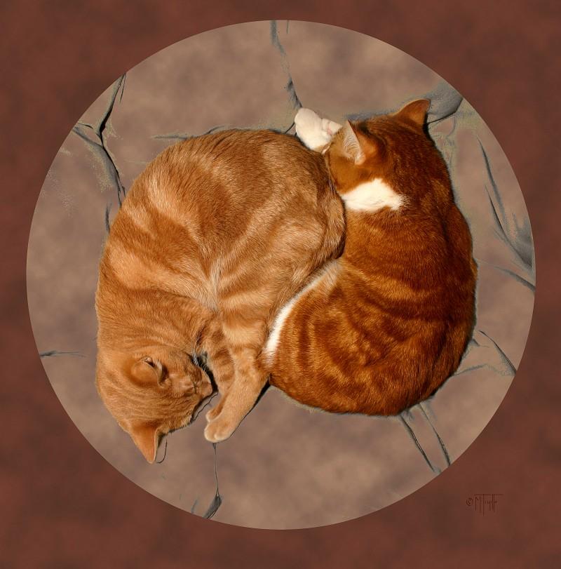 Yin-Yang Cats