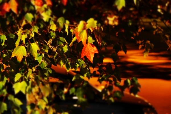 leaf, miniature, red, skewed