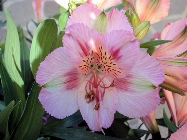 Il giardino dei fiori viventi