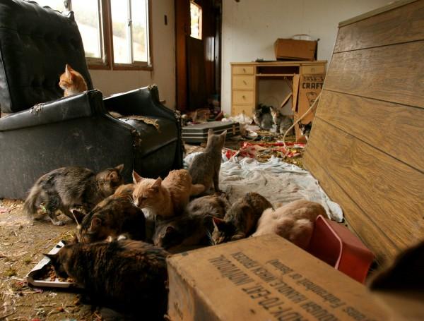 Cat homeless