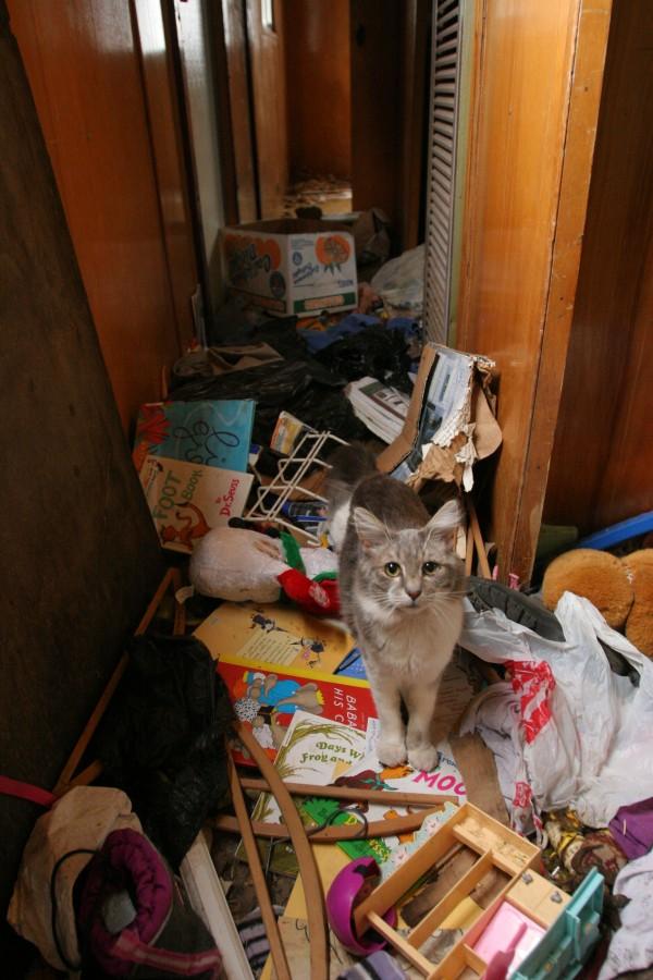 cats abandoned homeless kody whiteaker