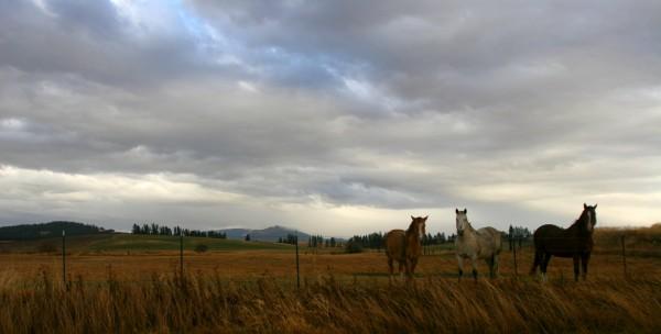 kody whiteaker horses
