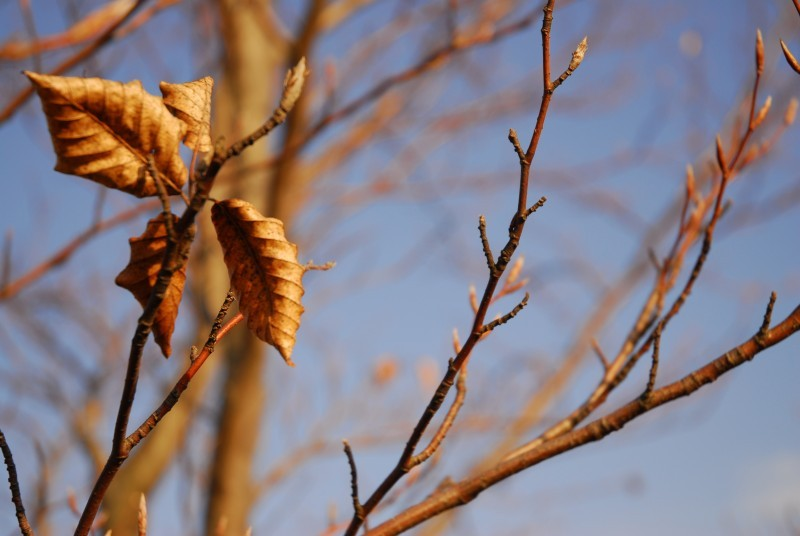 leaf against blue sky
