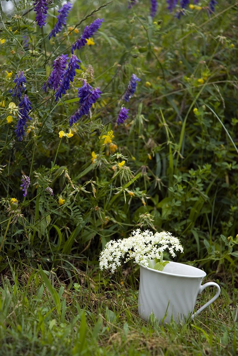 teacup and wildflowers