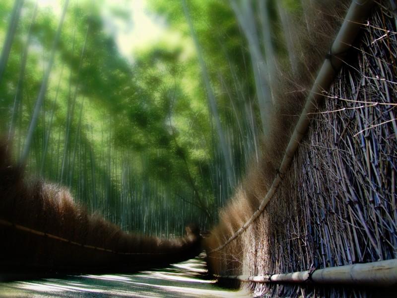 saga arashiyama bamboo walk