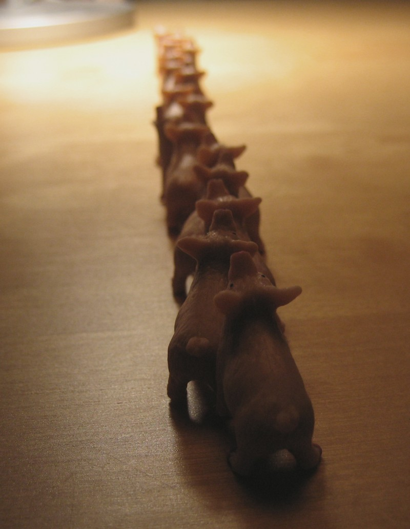 pigs in line