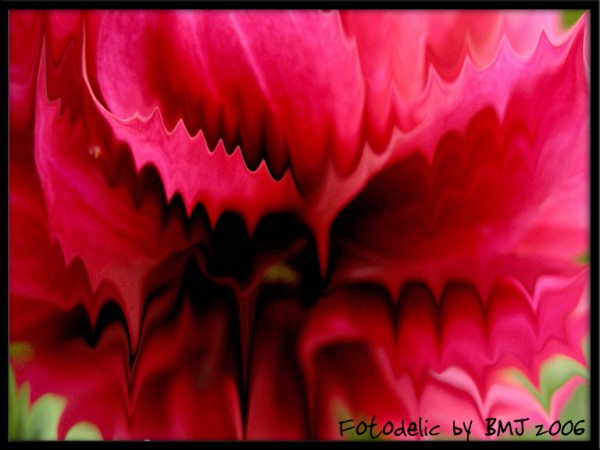 a crazy flower