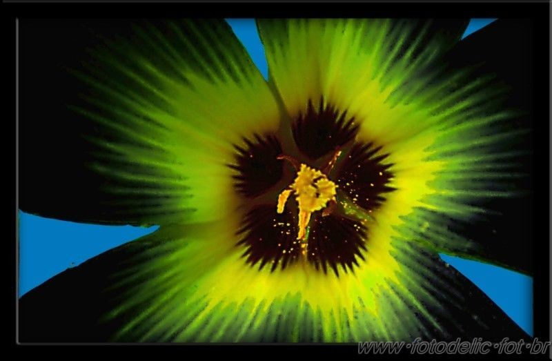 a flower