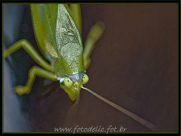 a roach
