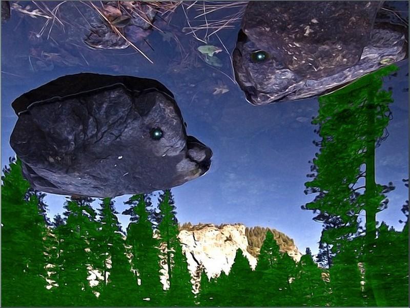 a reflection
