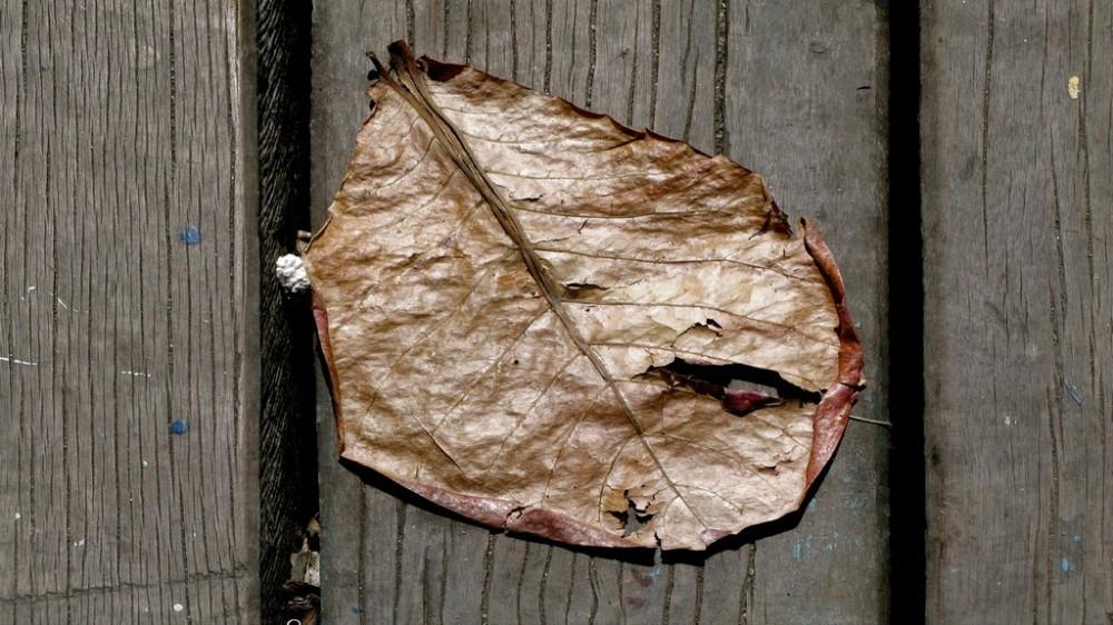 uma folha