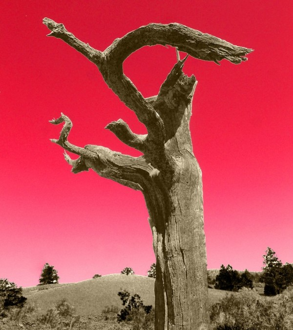 a ex-tree