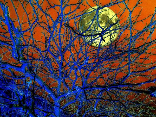 a moon
