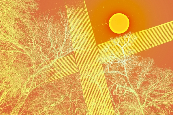 orangeish tree