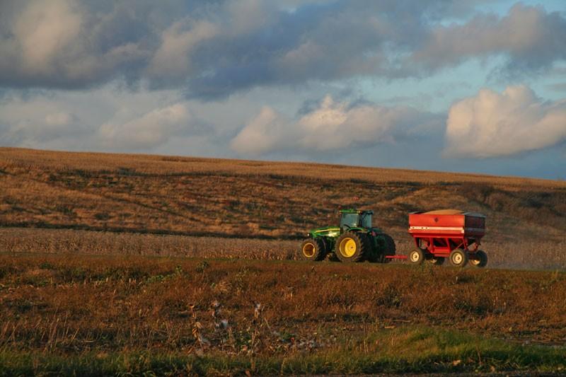 Dernière récolte - Last harvest