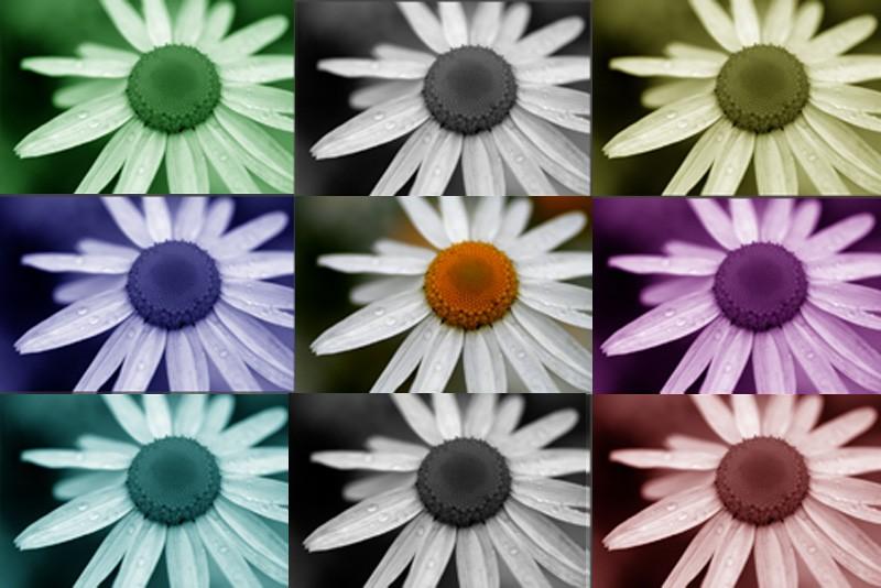 Variations sur marguerite -Daisy'variations