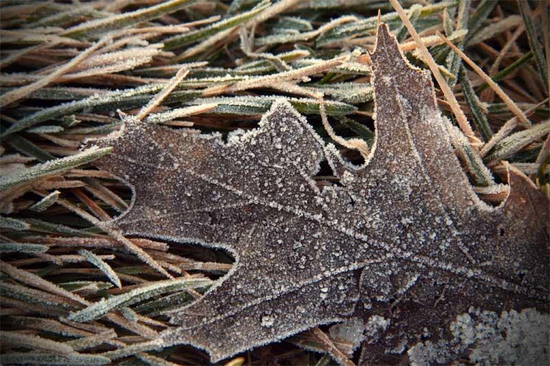 Matin gelé - Frozen morning