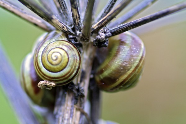 Snails's meeting - Réunion de colimaçons
