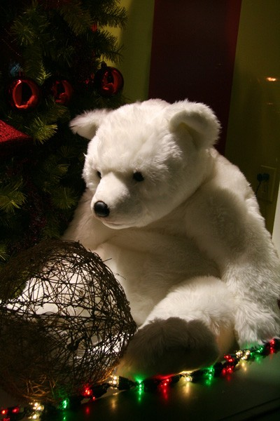 Christmas's bear - Ourson de Noël