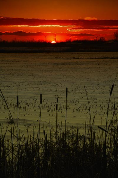 Sunset on St-Hubert