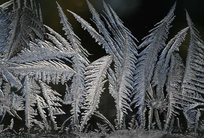 Winter moss - Mousse d'hiver