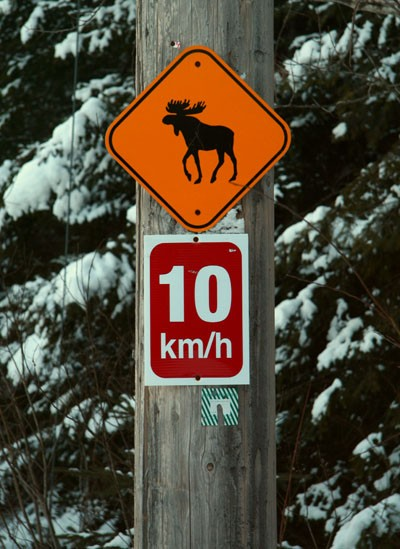 Moose's speed limit!