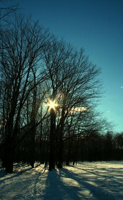 Winter sun - Soleil d'hiver