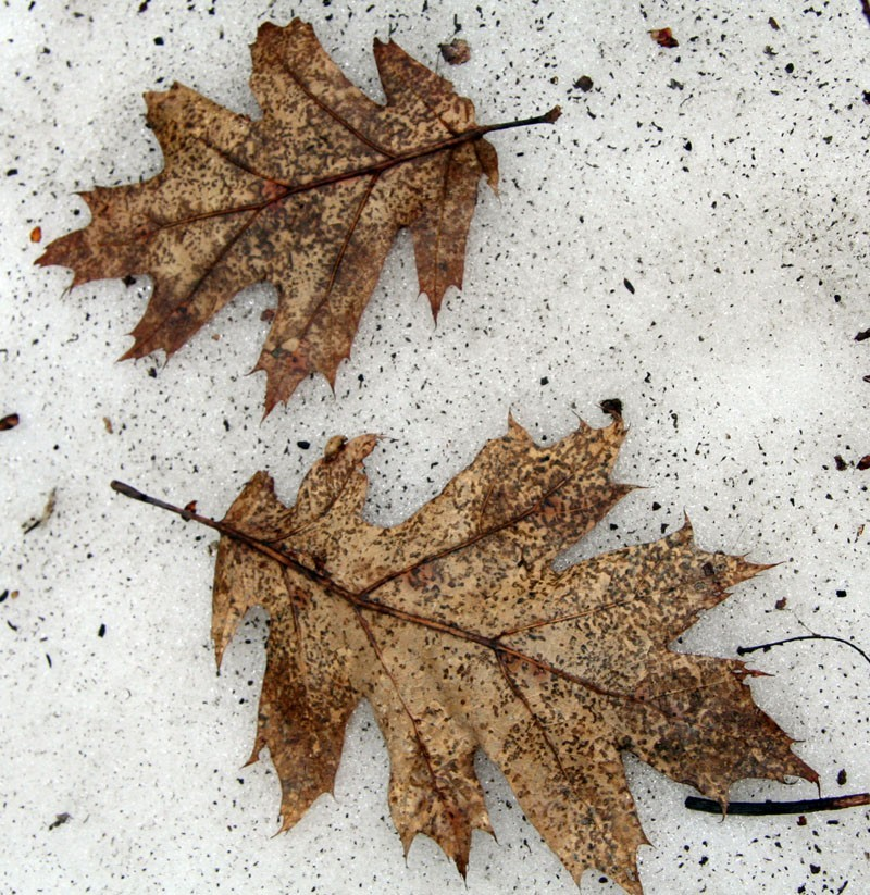 Winter's end - Fin d'hiver