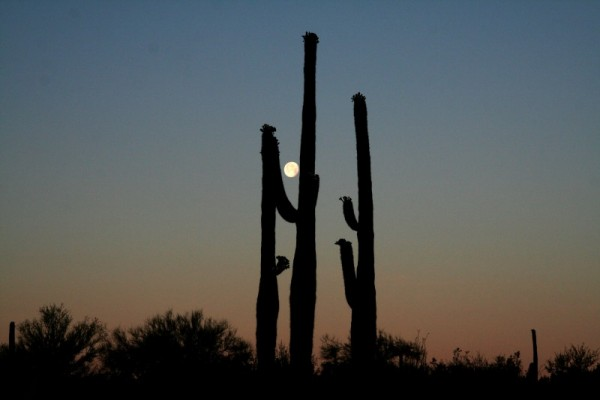 Moonset in Saguaro National Park, Arizona