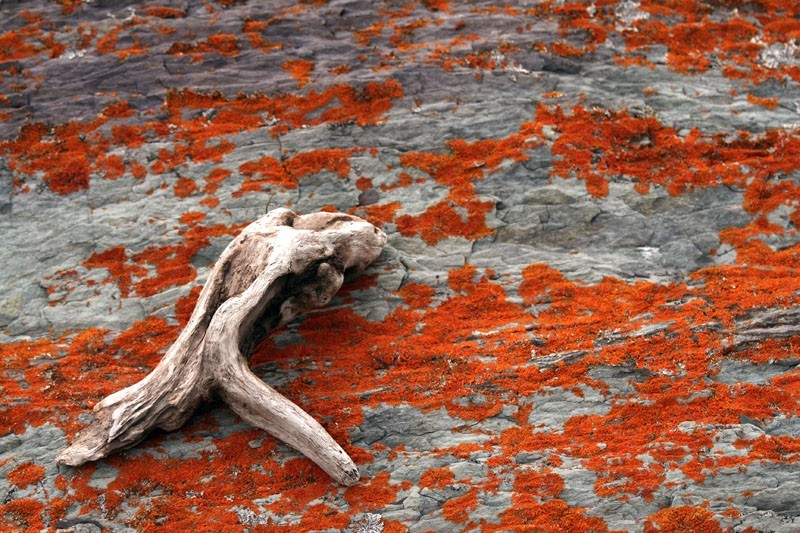 Lichens on the rocks