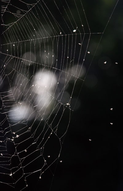 Spider's Web - Toile d'araignée