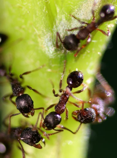 Ants'world - Le monde des fourmis