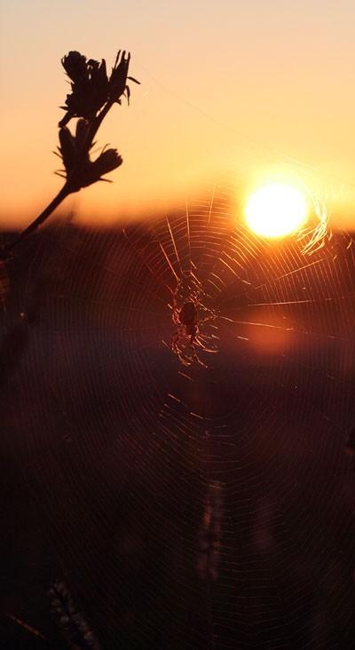 The spider on the sun - L'araignée du soleil
