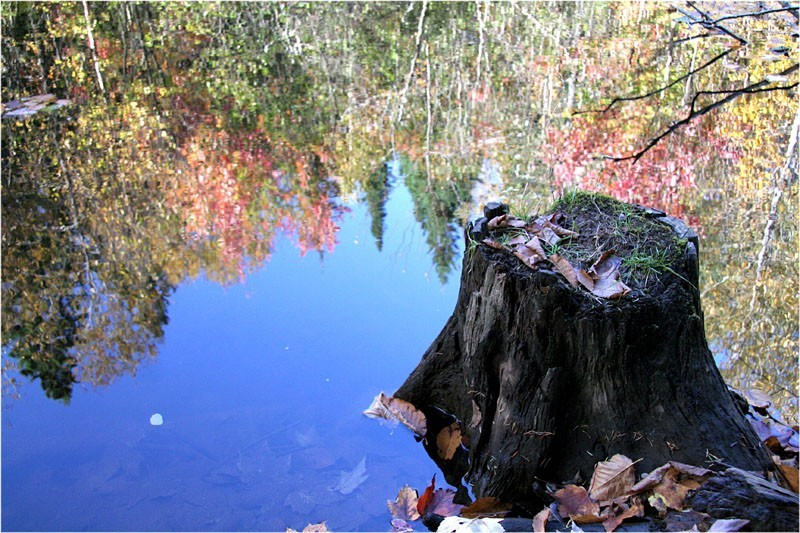 Fall reflection II - Reflexion automnale II
