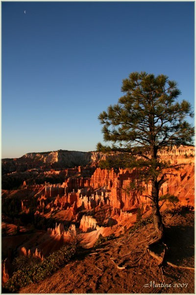 Trees of Bryce