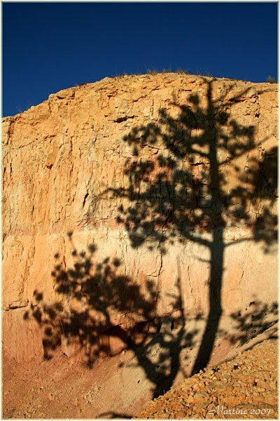 Trees of Bryce : The shadow