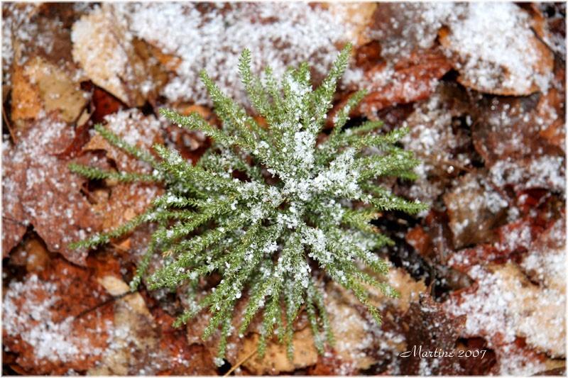 Beginning of winter - Début d'hiver