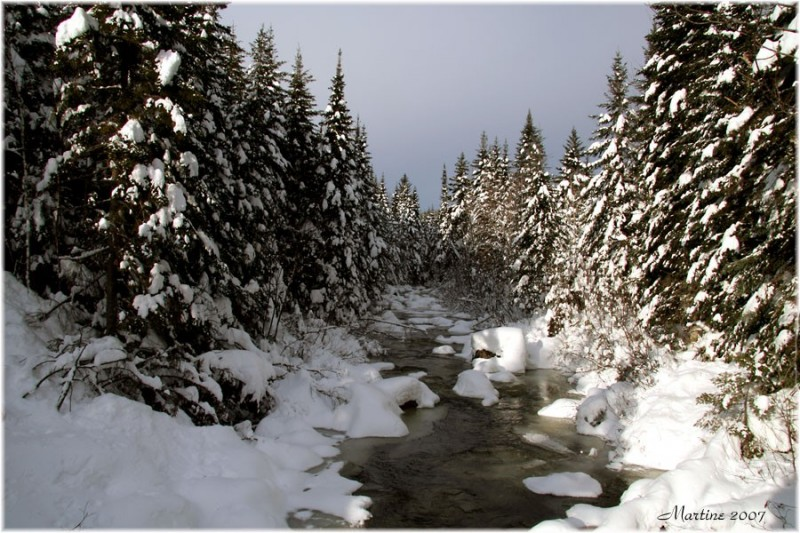 Rivière aux Pins - Pine