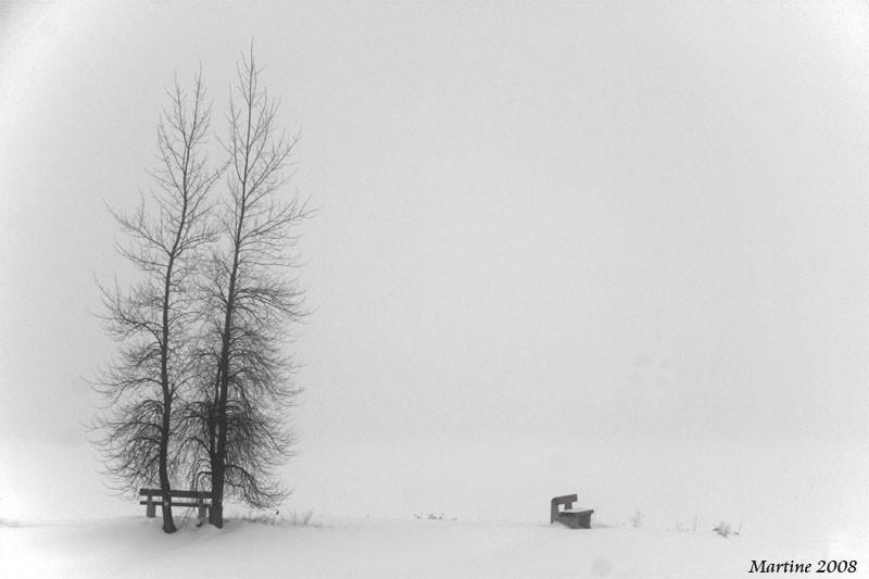 Fog - Brume