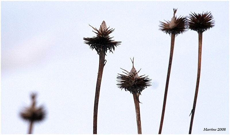 Winter flowers - Fleurs d'hiver