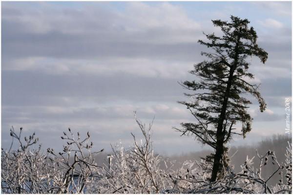 Icy landscape - Paysage glacé