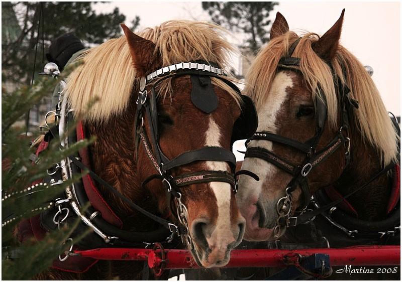 The horses - Ls chevaux