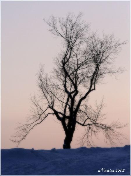 The tree - L'arbre