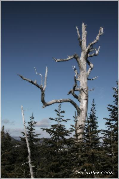 Stump - Chicot